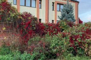 Центр реабилитации гармония Иваново